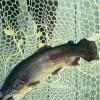 トラウト管理釣り場で流行ってるおすすめルアーとメーカーの初心者向けまとめ