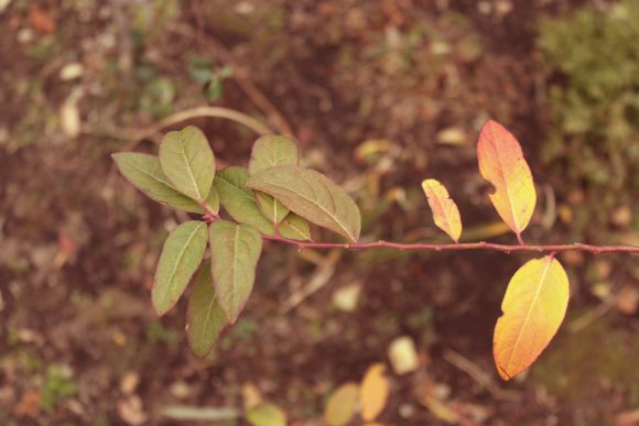 晩秋の寒さを表す枯れ葉